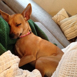 Dog sleeping on couch, first time homebuyer, student loans