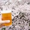花見の宴会で場所取り不要?東京都内の厳選穴場スポット2018