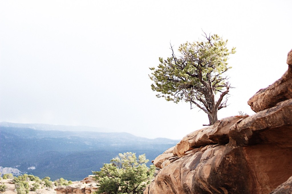 tree of life torrey