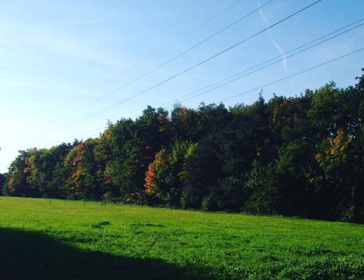 podzimní Hostivařský lesopark