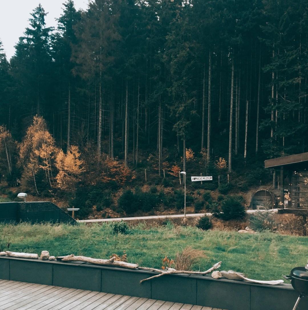 Výhled do lesa