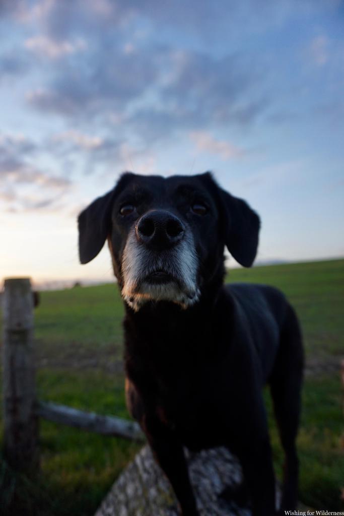 Photo of dog at home