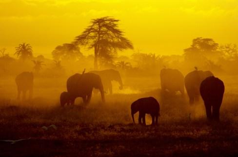 photo by Grace Mysak/Elephant Sunrise