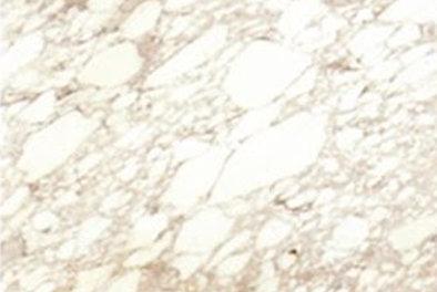 supplier-marmer-arabescato-marmer-import-harga-marmer-import-wismita-marmer-marble