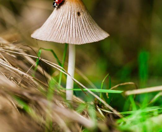 Pilze im Ökosystem, Pilz-Sammlung