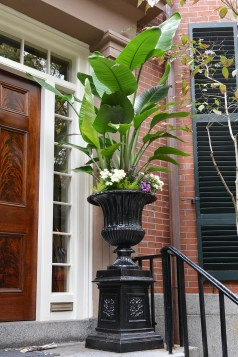 Tropical Urns