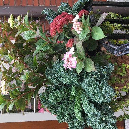 Rich colors and textures abound in this fall container garden