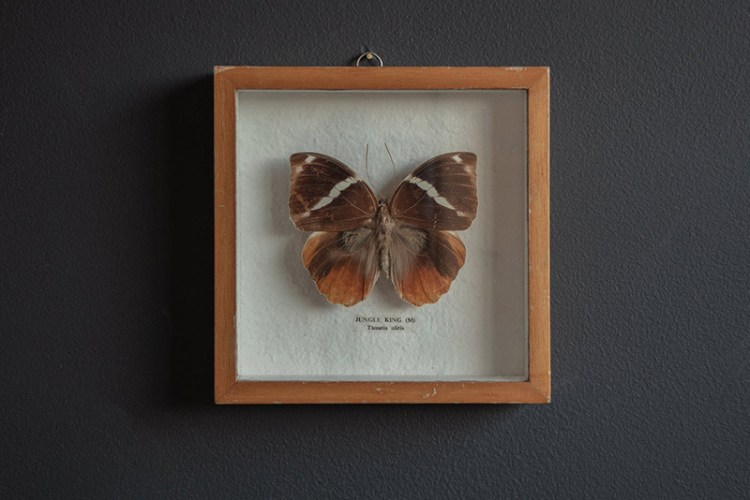 Framed Butterfly Wit & Delight