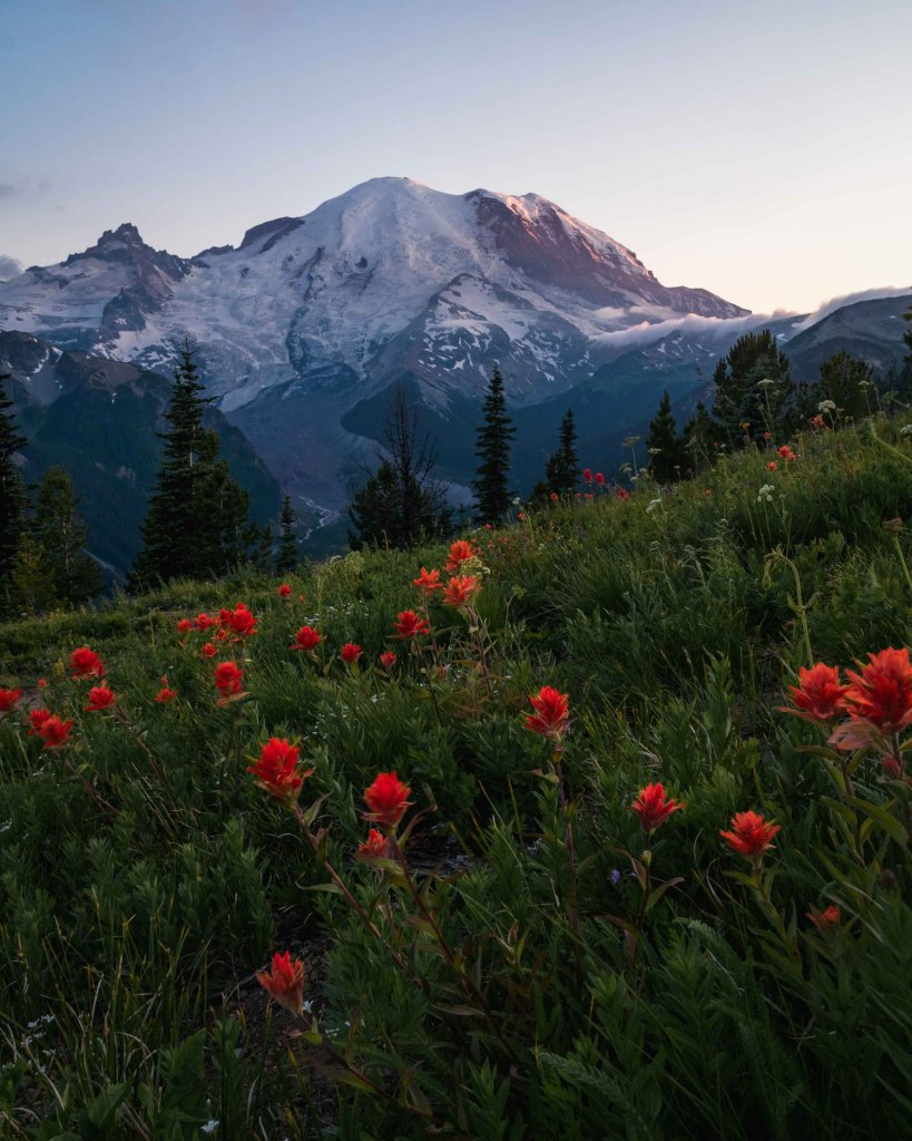 wildflowers-at-sunrise-ranier-witandfolly.co