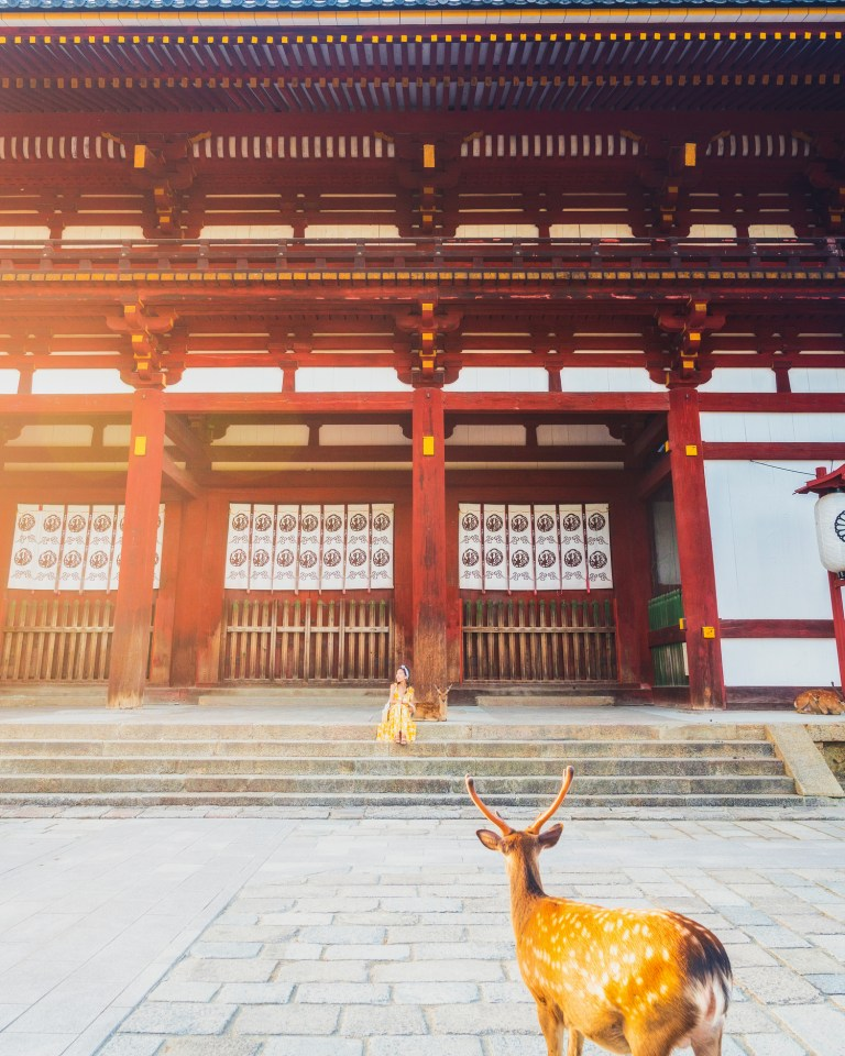 photo of deer and woman sitting on stairs at nara park near kyoto