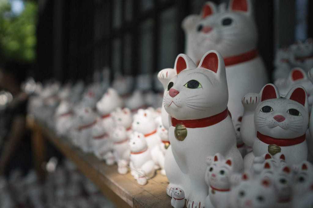 photo of many maneki neko cats at gotokuji temple near tokyo