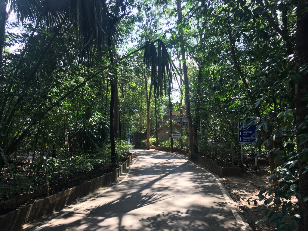 Forest pathway to Wat Umong in Chiang Mai, Thailand