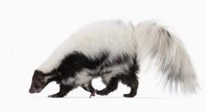 3001702-poster-1280-skunk-works