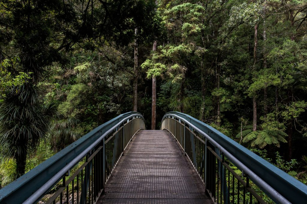 Bridge toward trees