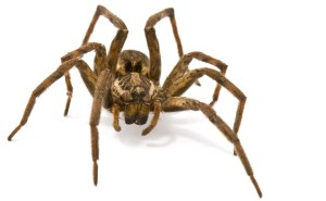 spider_iStock_000007790175Small