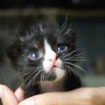 保護猫の里親を申し込むときに言われる「トライアル」って何?