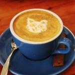 同じようで全く違う「猫カフェ」の3つのスタイルとは?