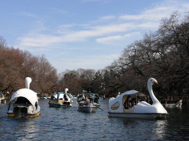 井の頭恩賜公園 井の頭池のボート