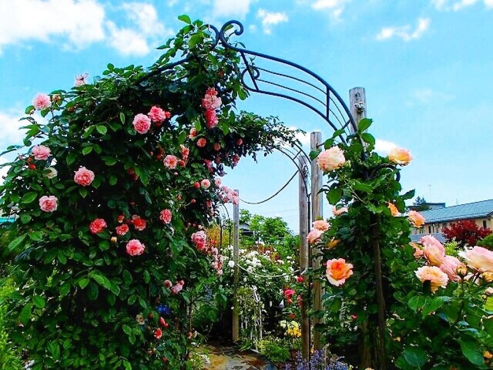 三鷹市 花と緑の広場