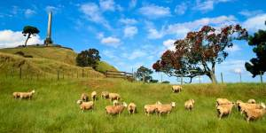A picture of One tree Hill in Auckland New Zealand, with sheep in the foreground.