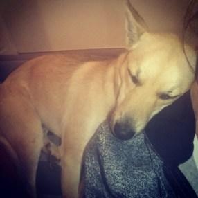 Sasha (we reckon she is a FOX!)