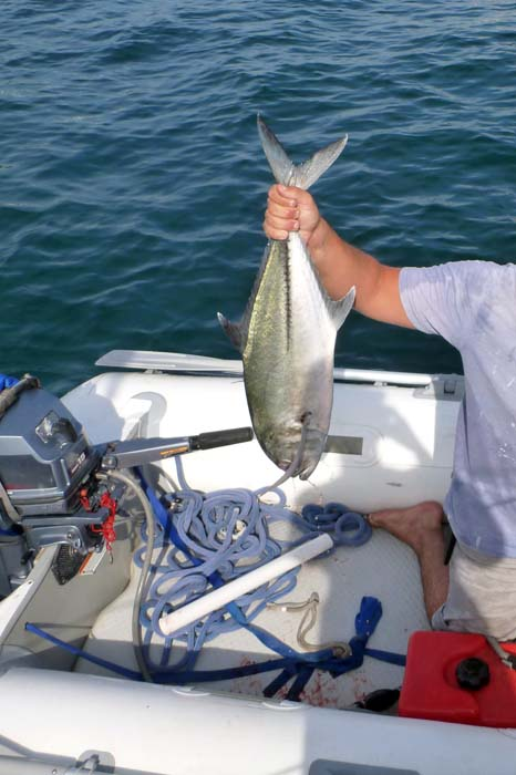 Yellow fin tuna caught in Brio's dinghy