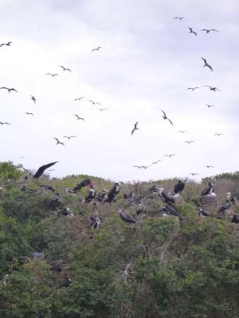 Jurassic Park Isla Isabel
