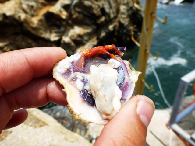 Mmmm oysters from the cliff divers