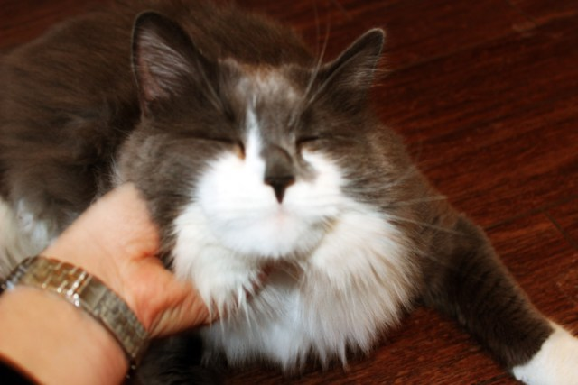 """""""Qwerty"""" the friendly cat that came with the first place"""