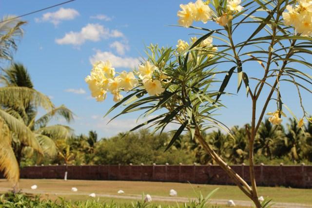 Tropical flowers in Bahia del Sol