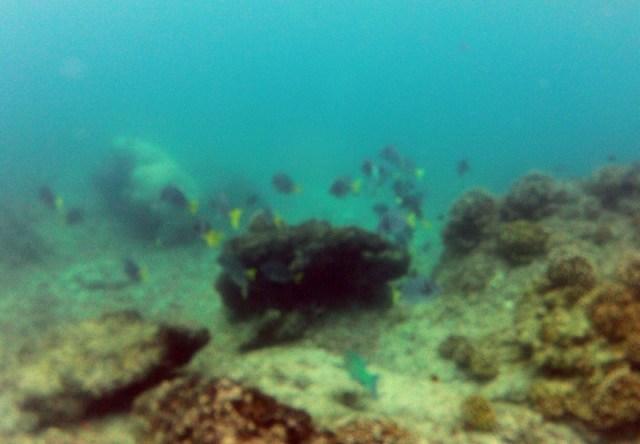 Snorkelling in Islas Secas, Panama