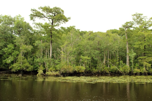 Waccamaw River on the Intracoastal in South Carolina