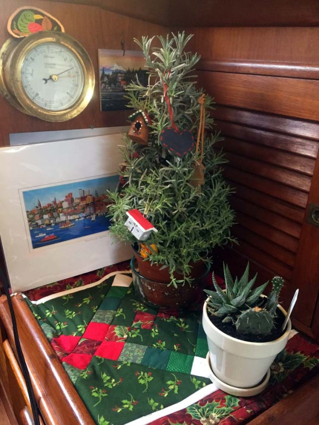 Christmas aboard - a baby lavender tree
