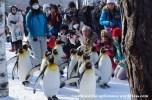 07Feb14 Asahikawa Asahiyama Zoo 004