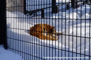07Feb14 Asahikawa Asahiyama Zoo 020