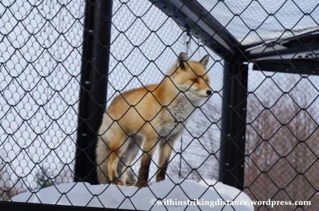07Feb14 Asahikawa Asahiyama Zoo 036