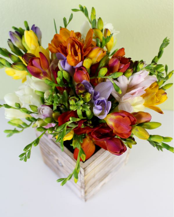 Freesia flowers by The Bouqs Co.