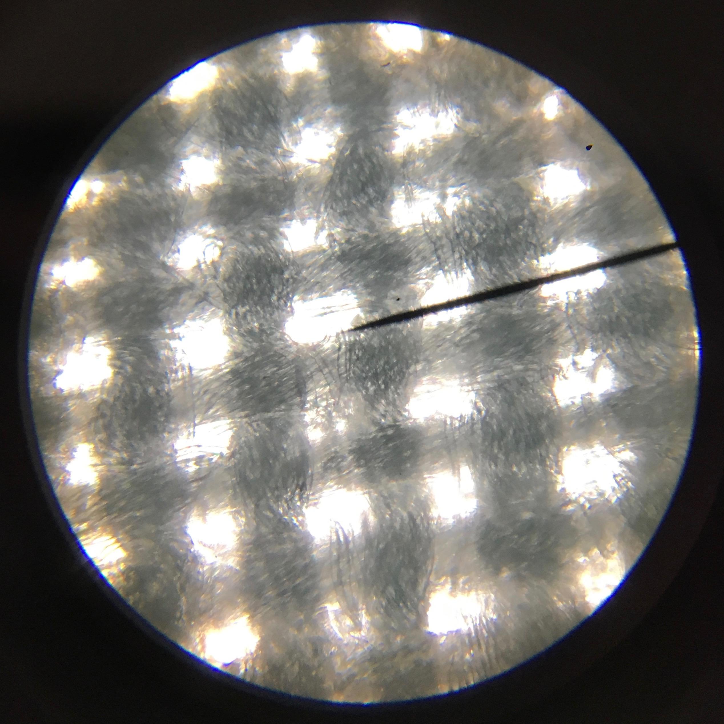 Microscope image of Atelier Brunette lawn.