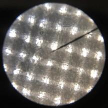 Microscope image of generic lawn.