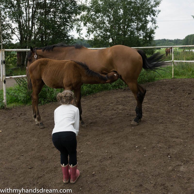 s_tee_and_horses-4