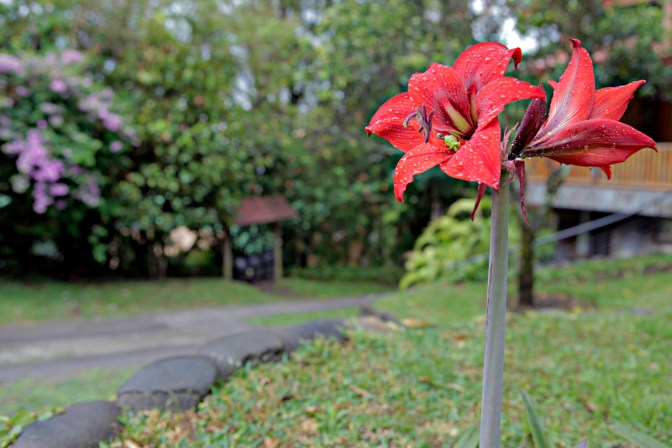 Monteverde Costa Rica Flower - JoeBaur