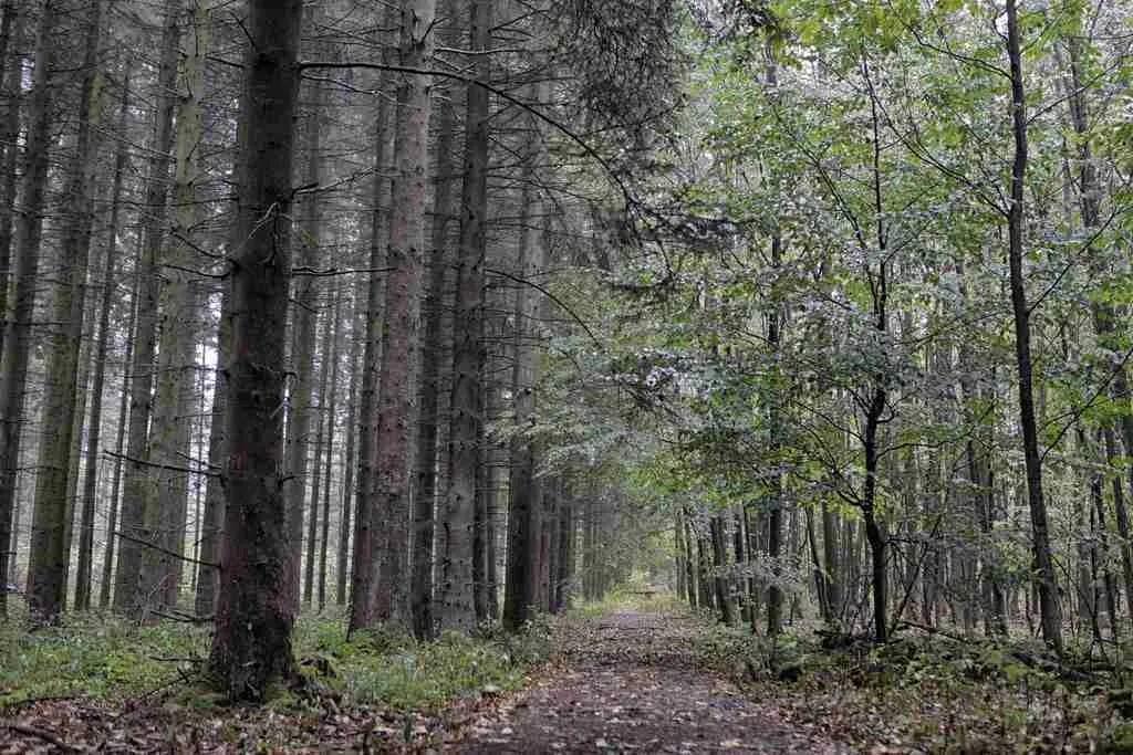 Hiking Eifel National Park Germany