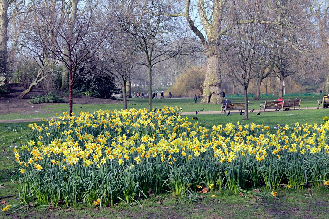 buckingham-palace-green-park