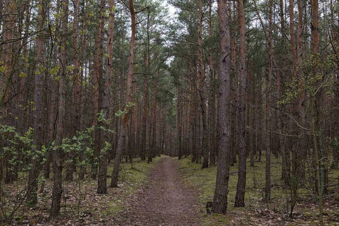 Kampinoski Park Narodowy Poland