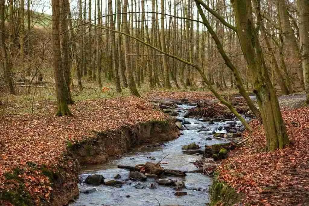 Stream along the Neanderlandsteig