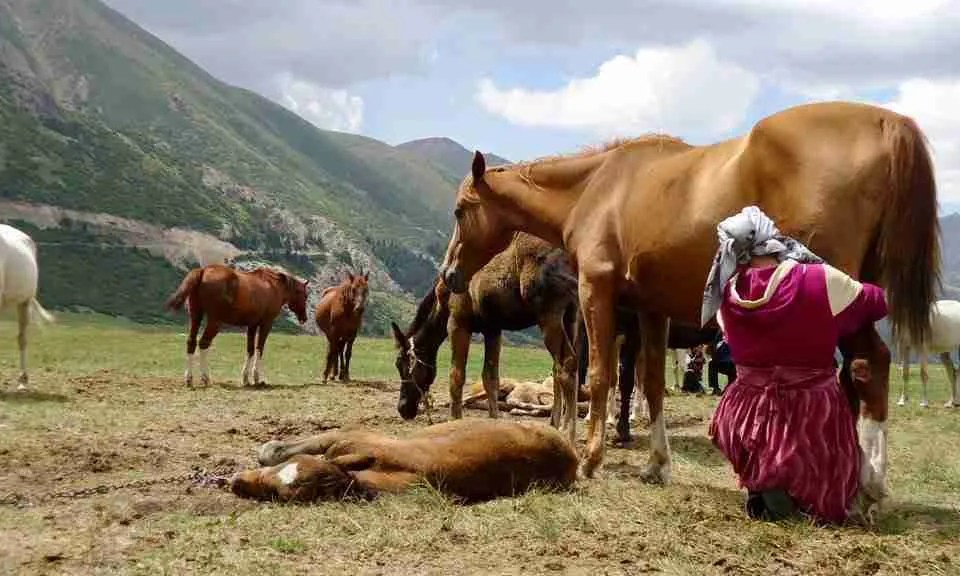 Former Peace Corps Volunteer Judson Moore Shares His Kyrgyzstan Travel Tips and What It's Like to Watch a Goat Sacrifice