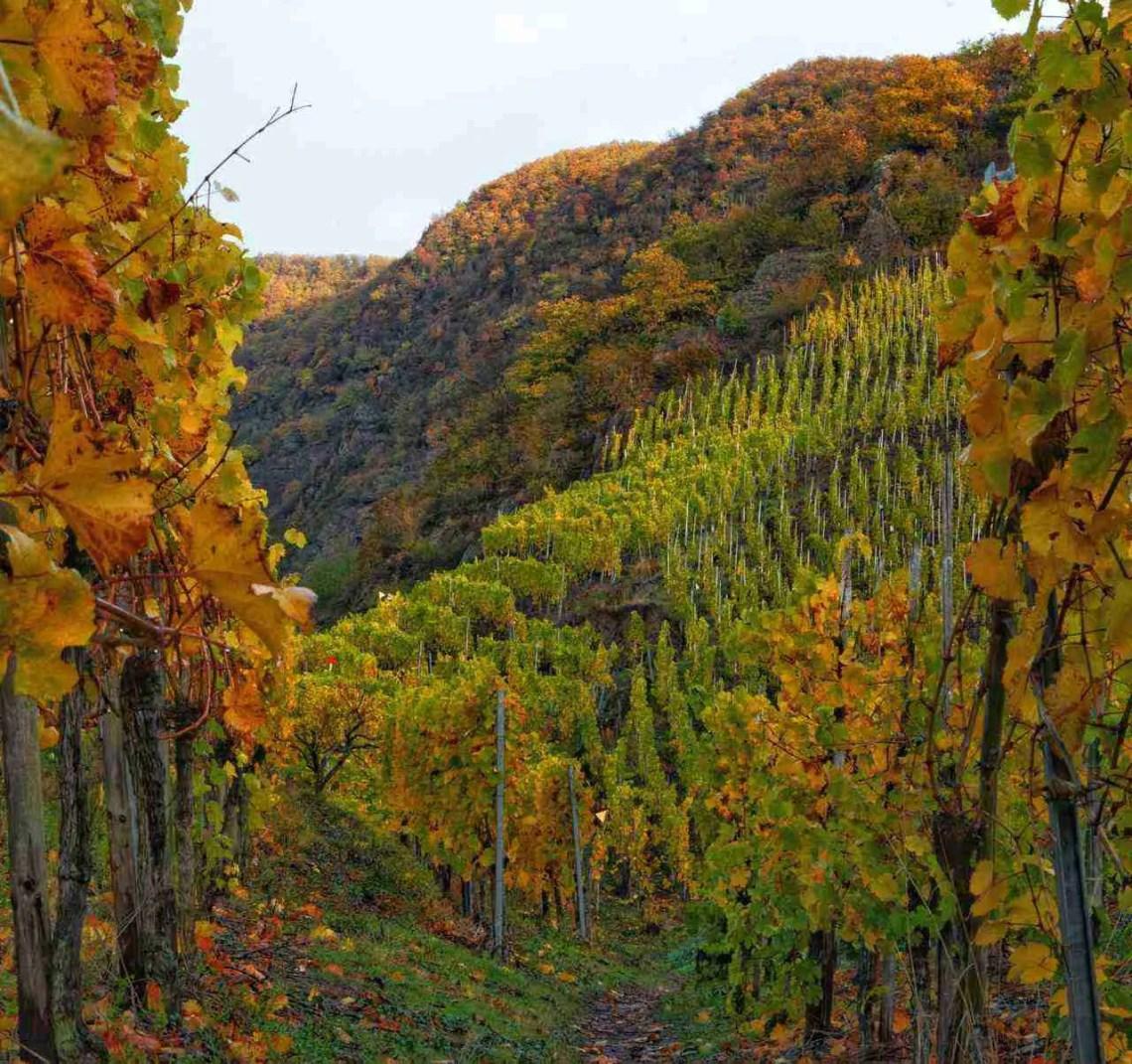 Moselle Vineyards