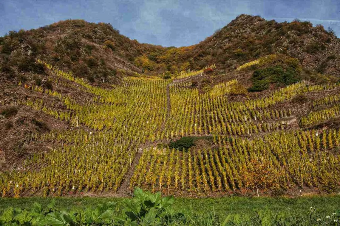 Mosel vineyard