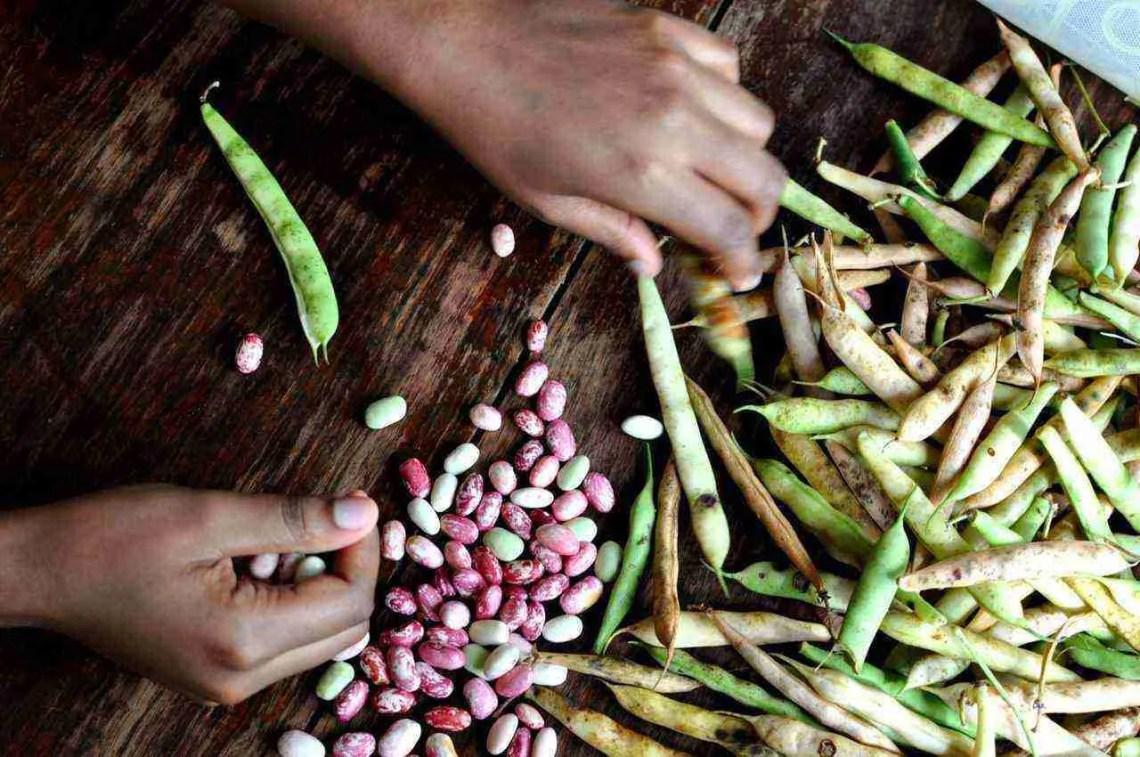 Shelling Beans