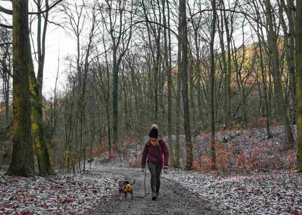 Dog Hiking in Germany